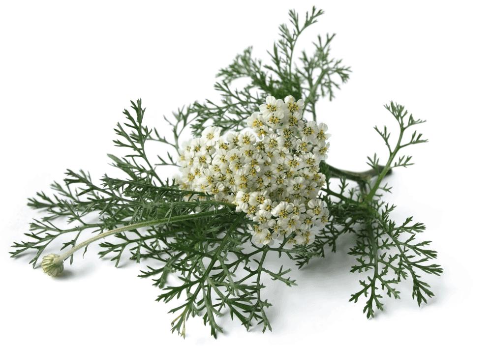 Herbs 35 - Ellia Natural Cosmetics - Cyprus Europe
