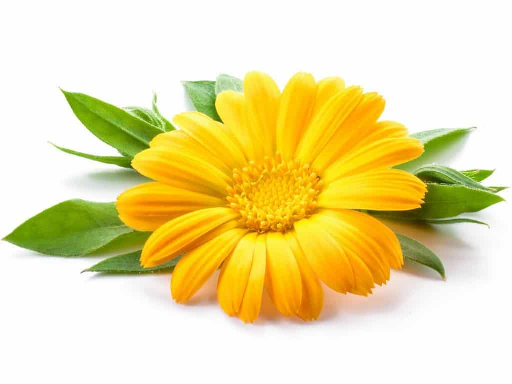 Herbs 5 - Ellia Natural Cosmetics - Cyprus Europe