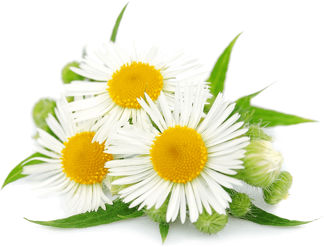 Herbs 28 - Ellia Natural Cosmetics - Cyprus Europe