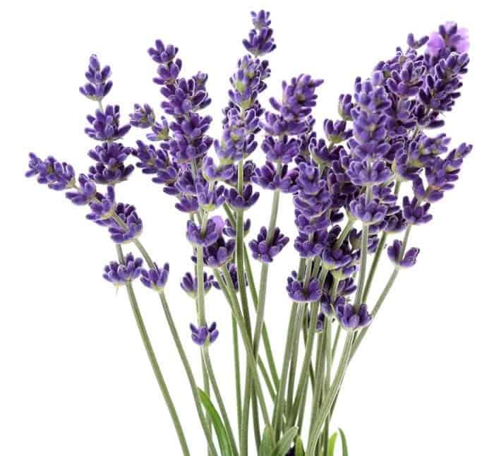 Herbs 22 - Ellia Natural Cosmetics - Cyprus Europe