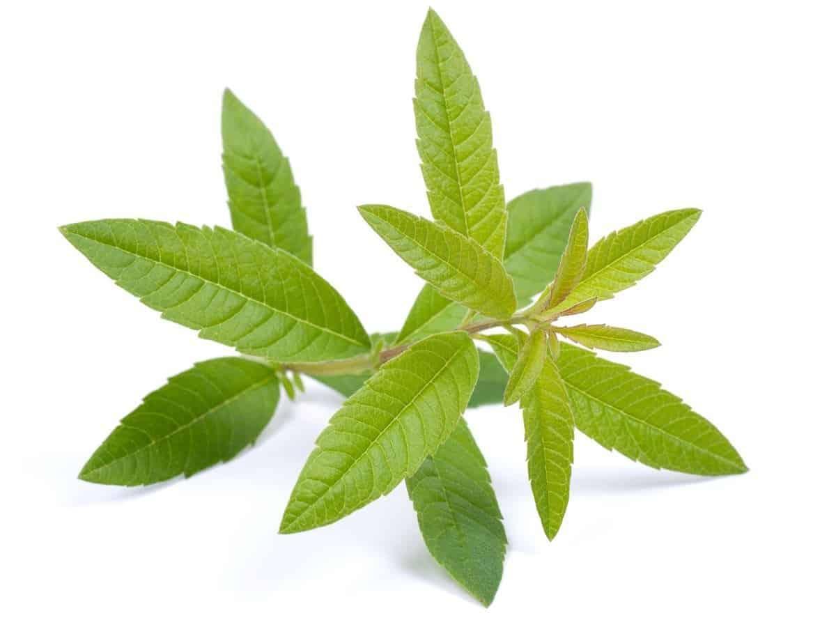 Herbs 10 - Ellia Natural Cosmetics - Cyprus Europe