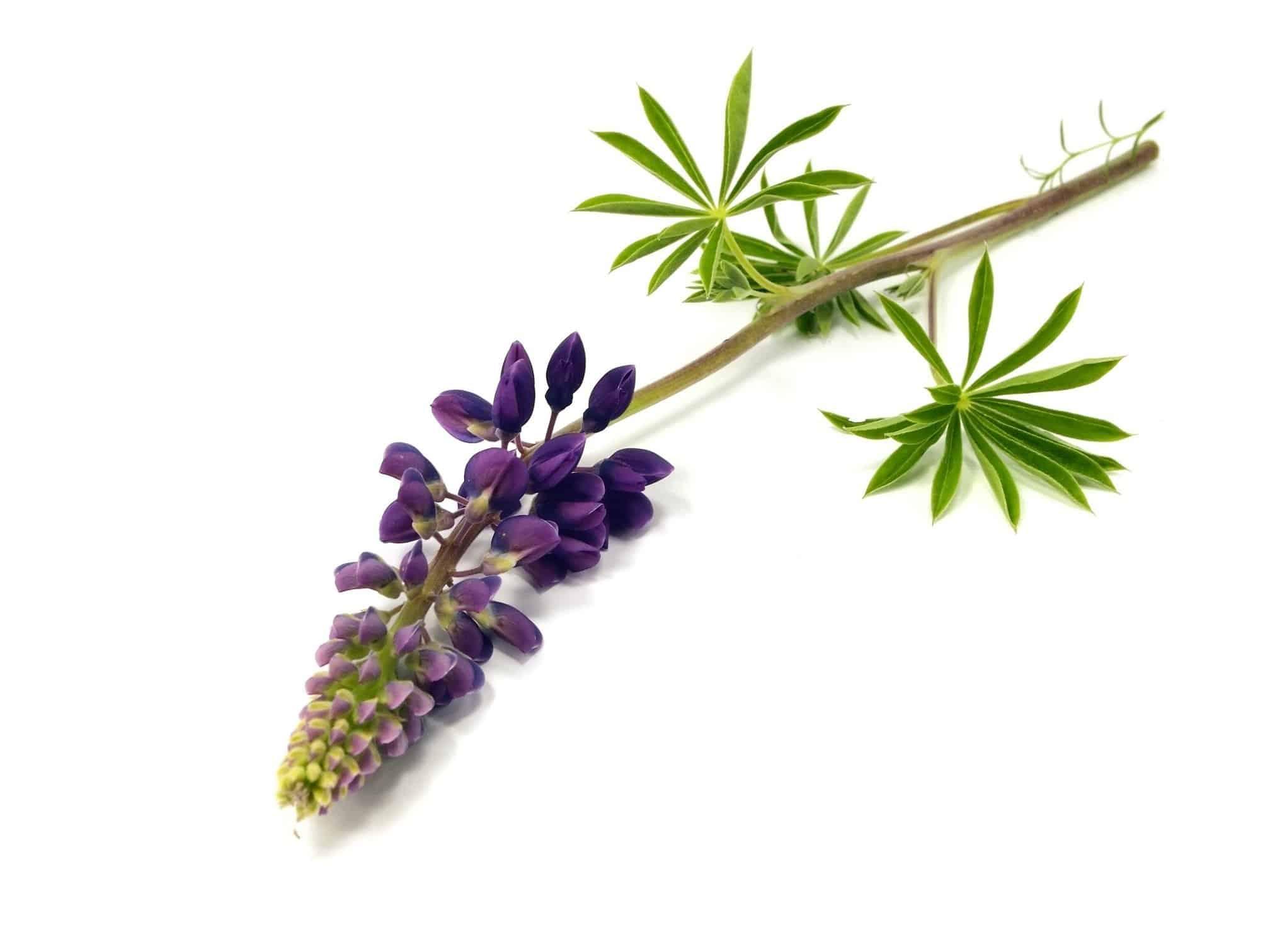 Herbs 14 - Ellia Natural Cosmetics - Cyprus Europe