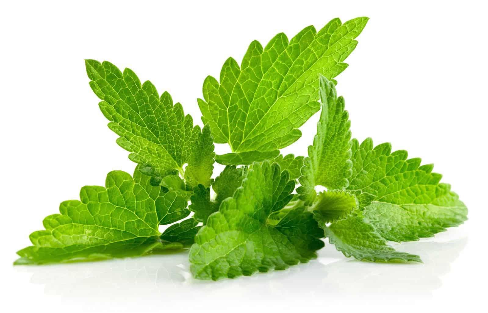 Herbs 9 - Ellia Natural Cosmetics - Cyprus Europe