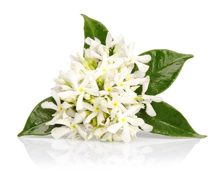 Herbs 30 - Ellia Natural Cosmetics - Cyprus Europe