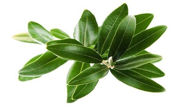 Herbs 21 - Ellia Natural Cosmetics - Cyprus Europe