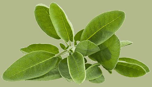 Herbs 8 - Ellia Natural Cosmetics - Cyprus Europe
