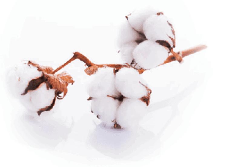 Herbs 42 - Ellia Natural Cosmetics - Cyprus Europe