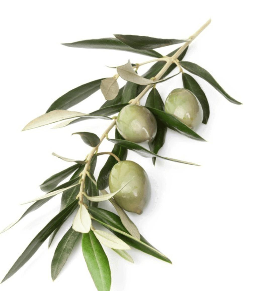 Herbs 44 - Ellia Natural Cosmetics - Cyprus Europe