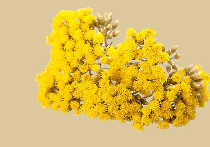 Herbs 41 - Ellia Natural Cosmetics - Cyprus Europe